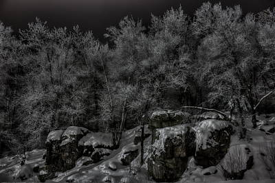 Book Quotes - Nighttime Snow Flocked Trees by Dale Kauzlaric