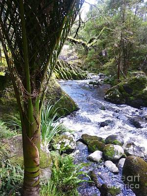 Photograph - Nikau At Wairere Boulders Creek by Dianne  Connolly