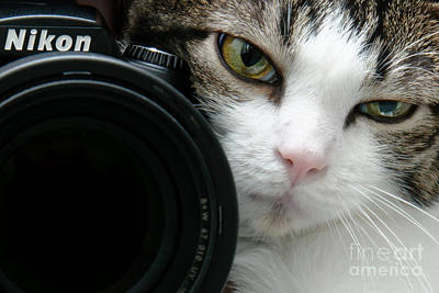 Andee Design Feline Photograph - Nikon Kitty by Andee Design