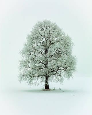 Hoar Frost Wall Art - Photograph - Nimloth by Heinz Hieke