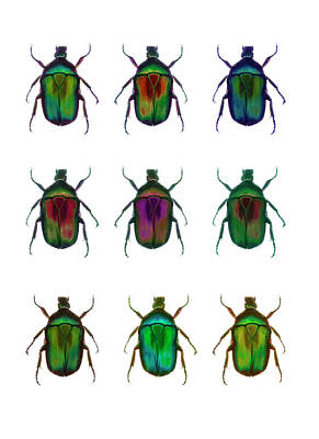 Trapped Photograph - Nine Beetles Against A White Background by Richard Boll