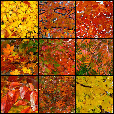 Photograph - Nine-square Autumn Leaves by Jean Wright