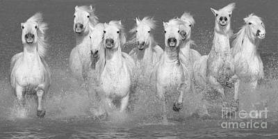 Nine White Horses Run Art Print by Carol Walker