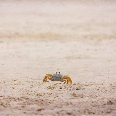Photograph - Ninja Crab by Judy Hall-Folde