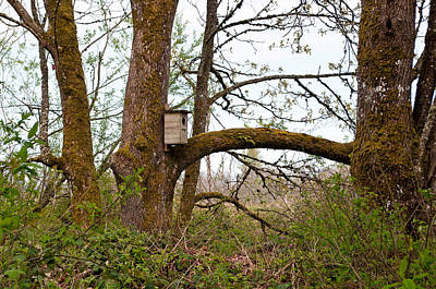 Photograph - Nisqually National Wildlife Refuge / Trees And Birdhouse by Tikvah's Hope
