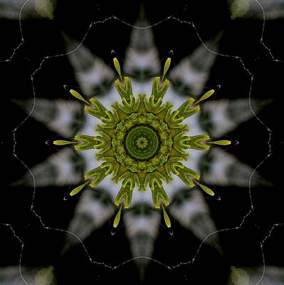 Photograph - No 2 Kaleidoscope by Flow Fitzgerald