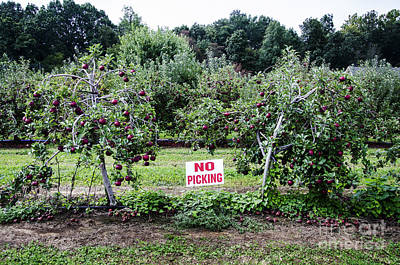 Photograph - No Apple Picking by Paul Mashburn