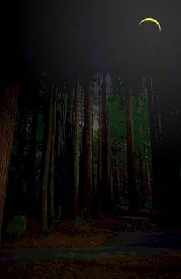 Photograph - No Ca Redwoods Beauty At Night Two by Joyce Dickens