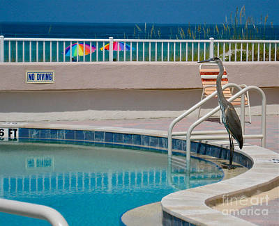 Photograph - No Diving by Joan McArthur
