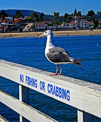 Photograph - No Fishing Or Crabbing by Joseph Coulombe