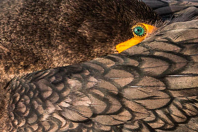 Comic Character Paintings - Cormorant Close-up Green Eye by Patti Deters