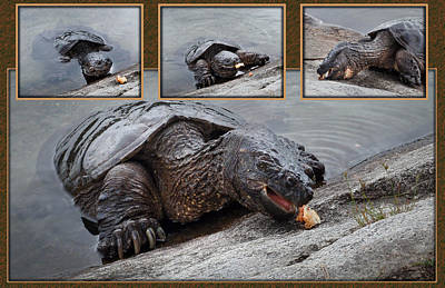 Photograph - Hungry Snapping Turtle Collage by Patti Deters