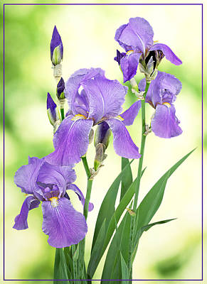 Photograph - Purple Iris - Grape Scented by Patti Deters