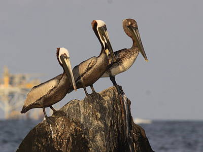 Ps I Love You - No More Room - Pelican - Gulf of Mexici by Travis Truelove