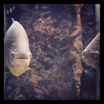 Animals Wall Art - Photograph - No One Pulls Off A Fish Face Quite Like by James Granberry
