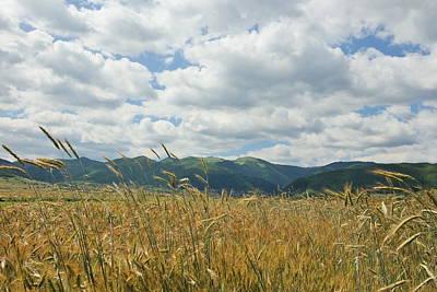Wheat In The Wind Art Print by Stefan Batog
