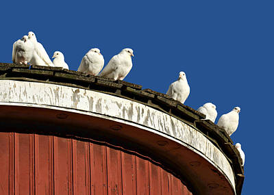 Dovecote Photograph - No Place Like Home by Nikolyn McDonald