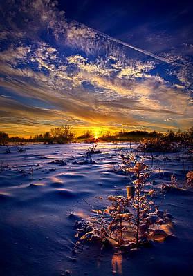 Ice Storm Photograph - No Regrets by Phil Koch