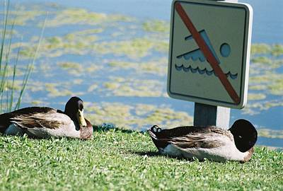 Photograph - No Swimming by Kerri Mortenson