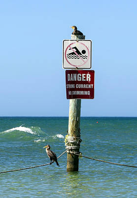 Seabirds Photograph - No Swimming by Zina Stromberg