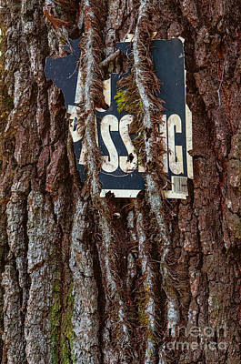 Photograph - No Trespassing by Kathleen K Parker