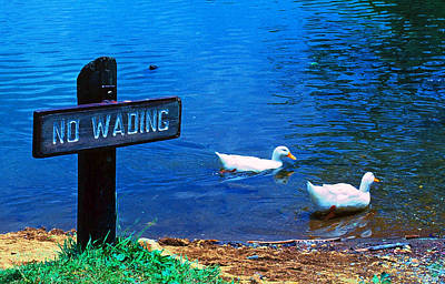 Photograph - No Wading by Marie Hicks