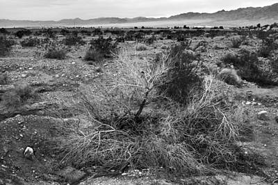 Mohave Az Photograph - No Water by Glenn DiPaola