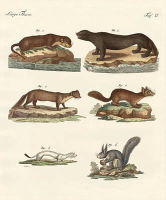 Otter Drawing - Noble Furs by Splendid Art Prints