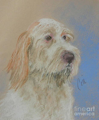 Spinone Wall Art - Drawing - Noble Hunter by Cori Solomon