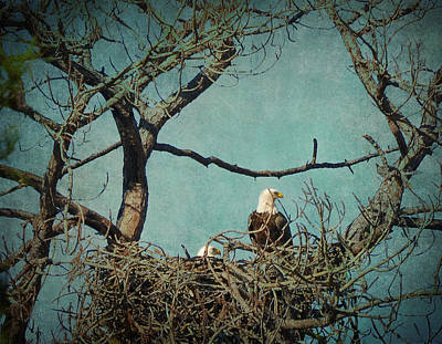 Photograph - Noble Pair Of American Bald Eagles In Treetop Nest by Carla Parris