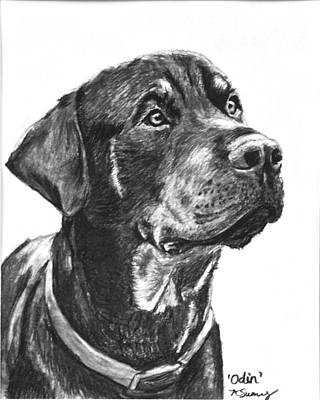 Noble Rottweiler Sketch Art Print by Kate Sumners