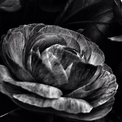 Photograph - Noir Drama by Kathleen Messmer