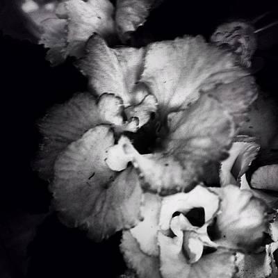Photograph - Noir Violet by Kathleen Messmer