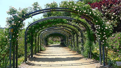 Photograph - Noisette Rose Tunnel by Denise Mazzocco