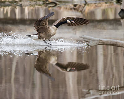 Photograph - Noisy Landing by Dale Nelson