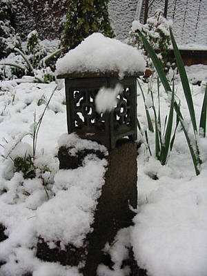 Photograph - Nola Snow In The Garden by Marian Hebert
