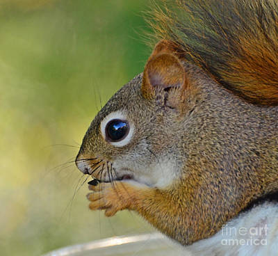 Spot Of Tea Rights Managed Images - Nom Nom Squirrel  Royalty-Free Image by Kerri Farley