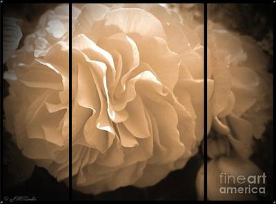 Photograph - Non-stop Begonia Triptych by J McCombie
