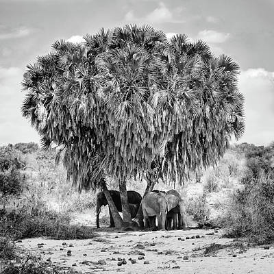 Kenya Photograph - Noon Meeting by Marcel Rebro
