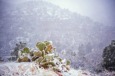 Nopal In Snow Art Print by Anthony Citro