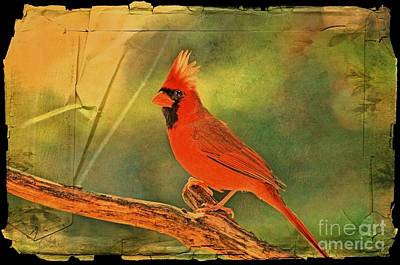 Photograph - Norghern Cardinal With Bokeh - Digital Paint IIi by Debbie Portwood