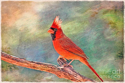 Photograph - Norghern Cardinal With Bokeh - Digital Paint V by Debbie Portwood