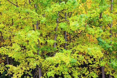 Amazement Photograph - North America Usa Alaska Aspen Trees by Terry Eggers