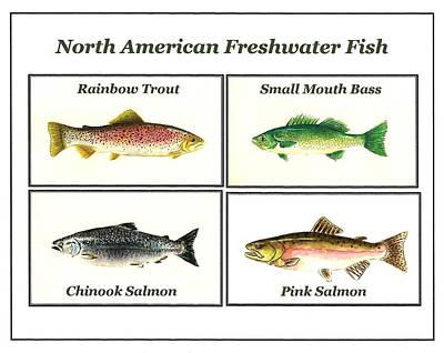 North American Freshwater Fish Art Print by Michael Vigliotti