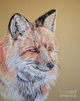Pastel - North American Red Fox by Ann Marie Chaffin