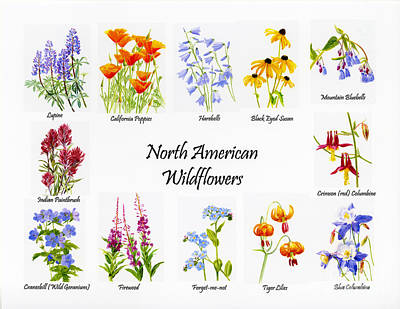 North American Wildflowers Poster II Art Print by Sharon Freeman