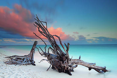 Branch Photograph - North Beach In Heron Island by Bruce Hood