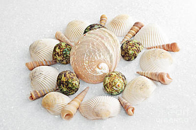 Photograph - North Carolina Circle Of Sea Shells by Andee Design