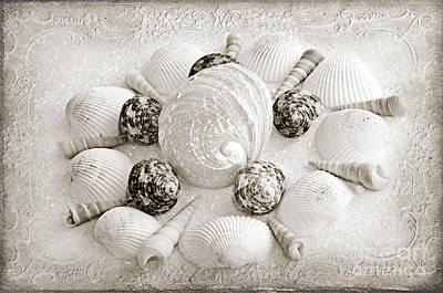 Andee Design Monochrome Photograph - North Carolina Circle Of Sea Shells Bw by Andee Design