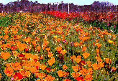 Painting - North Carolina Orange Poppies Original Art by G Linsenmayer